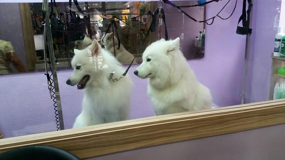 gijon-peluqueria-canina