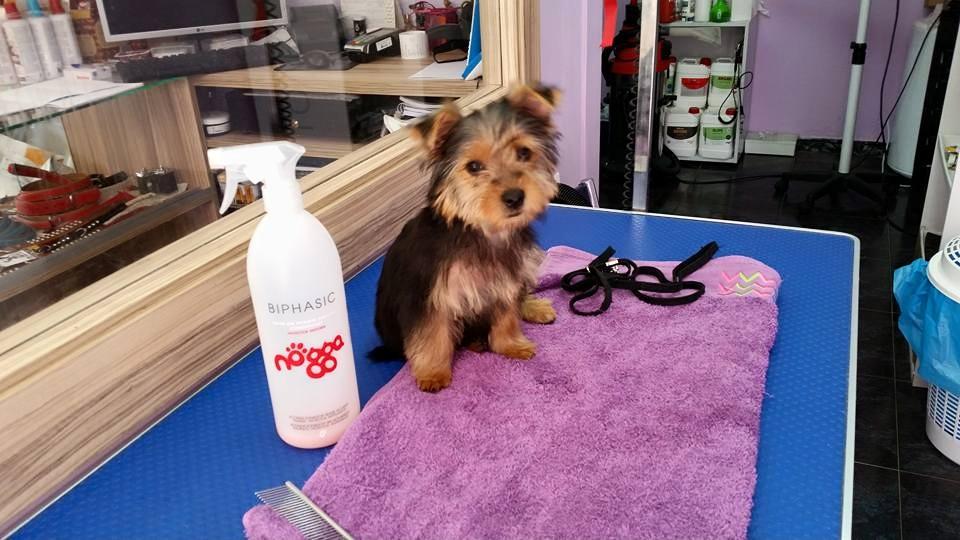mejor-peluqueria-canina-gijon