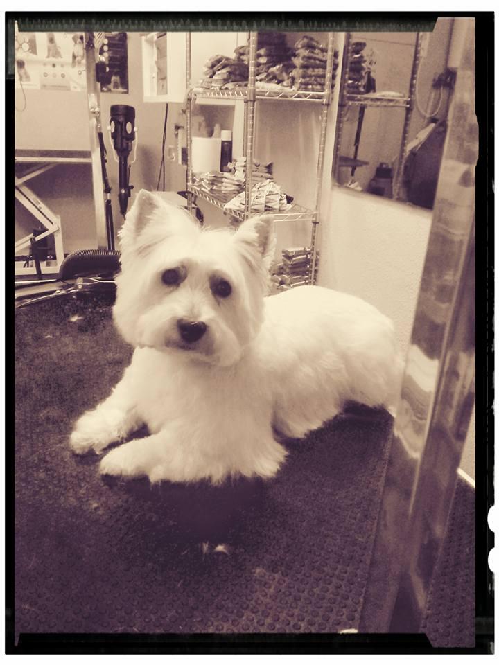 mejor-peluqueria-para-perros-gijon